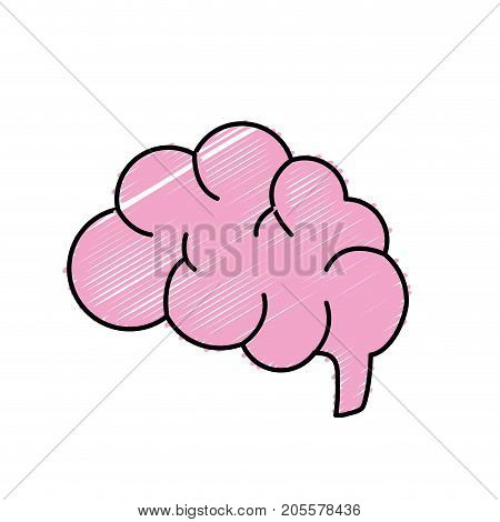 side brain human anatomy organ of inteligence vector illustration