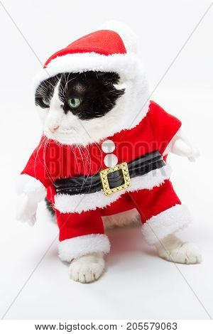 Black and white cat in Christmas dress and Santa hat standing on studio white background, looking left. Christmas holiday concept in vertical. poster