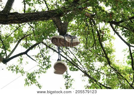 old pair of canvas shoes hanging or dangling from tree branch
