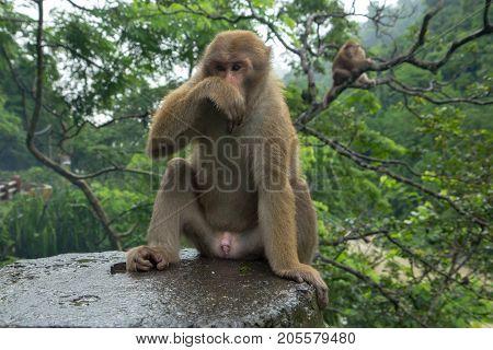 monkeys are sitting near the road in Darjeeling
