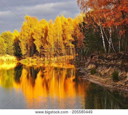 the wood with the turned yellow foliage at the lake gold foliage shines in the sun