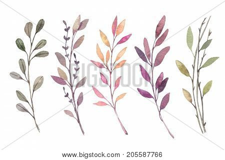 Hand drawn watercolor illustrations. Autumn Botanical clipart. Set of fall leaves herbs and branches. Floral Design elements. Perfect for invitations greeting cards blogs posters prints
