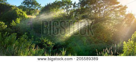 Beams Through Foliage Of Trees