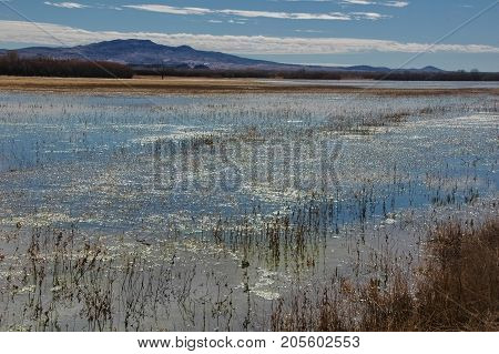 Bosque Del Apache Wildlife Refuge, Protected wetlands in the middle of the New Mexico desert.