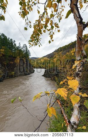 Kamchatka autumn landscape: picturesque mountain river flowing among roky mountain through the colorful forest. Eurasia Russian Far East Kamchatka Peninsula.
