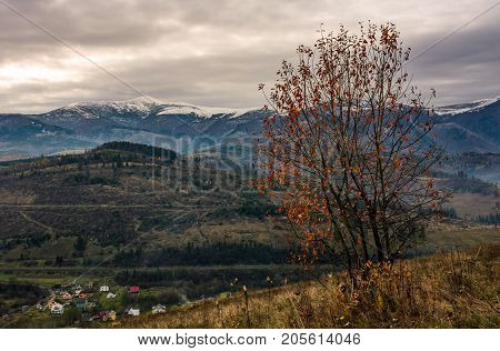 Tree With Red Foliage On Hillside In Late Autumn