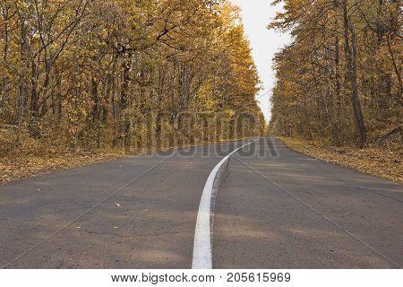Asphalt road with a dividing strip through the autumn deciduous forest