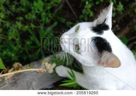 White cat hiding in the grass in garden of house