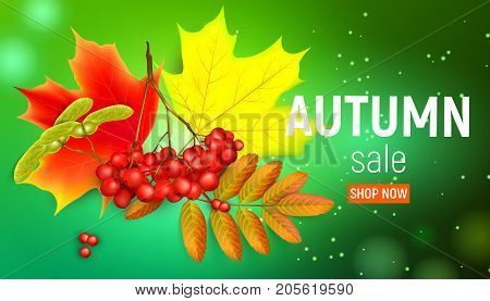 Sales banner with maple autumn leaves and rowan branches with ashberry on a green background. Autumn maple leaf and red rowan branches with ashberry on a green background. Vector illustration