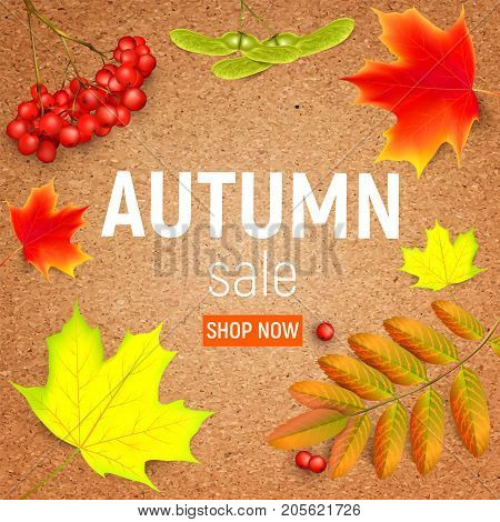 Sales banner on a crafting paper with maple autumn leaves and rowan branches with ashberry . Autumn maple leaf and red rowan branches with ashberry on a crafting paper. Vector illustration