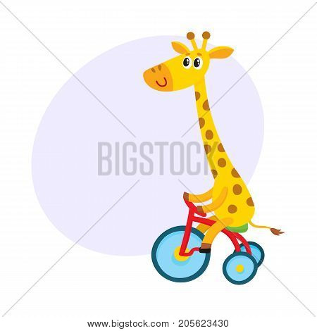 Cute little giraffe character riding bicycle, tricycle, cycling, cartoon vector illustration with space for text. Little baby giraffe animal character riding bike, bicycle, tricycle