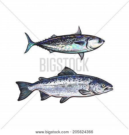 vector sketch cartoon style sea fish salmon and tuna set. Isolated illustration on a white background. Seafood delicacy, restaurant menu decoration design object concept