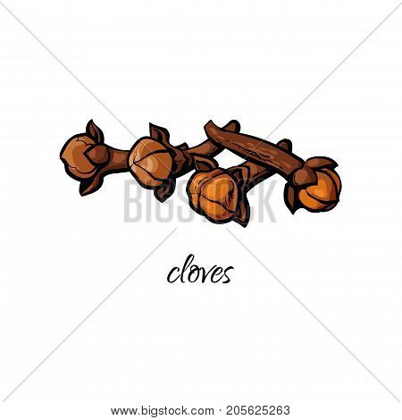 vector flat cartoon sketch style hand drawn dry cloves image. Isolated illustration on a white background. Spices , seasoning, flavorings, condiments and kitchen herbs concept.