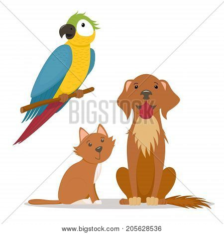 Pets - little cat, labrador dog and ara, macaw parrot, cartoon vector illustration isolated on white background. Cartoon cat kitten, ara parrot and big friendly dog characters, cartoon pets
