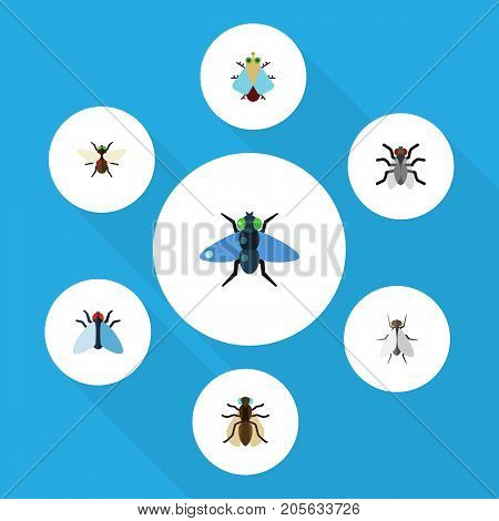 Flat Icon Fly Set Of Dung, Hum, Mosquito And Other Vector Objects