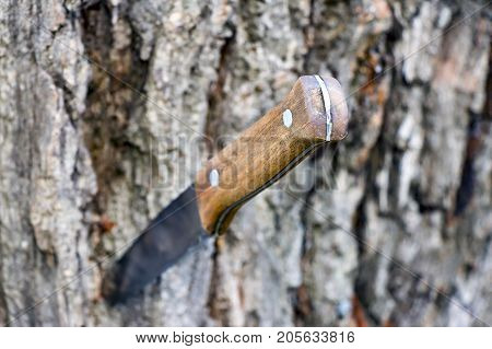 Selective focus. Knife with a wooden handle stuck in the trunk of a tree. poster