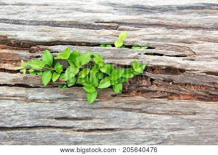 Young Plant Growing On The Old Wooden Tree New Life Idea Concept With Seedling Growing (Tree) Growing Concept. poster