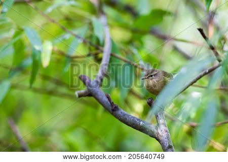 In the forest there is a Eurasian wren on a stick
