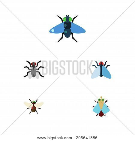 Flat Icon Fly Set Of Bluebottle, Dung, Gnat And Other Vector Objects