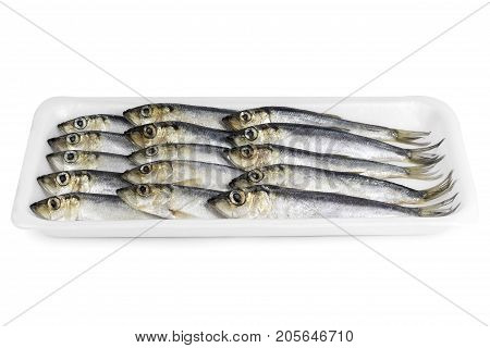 Fresh sprat decomposed on a substrate on a white background