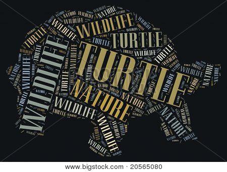 Wordcloud of turtle