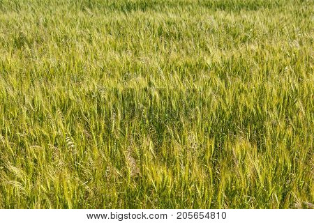 background from the field of natural crops