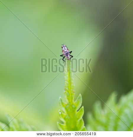 small insect in nature. macro . In the park in nature