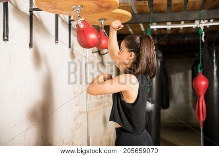 Boxer Using A Speed Bag For Training