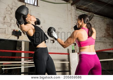 Boxer Knocking Out Her Opponent
