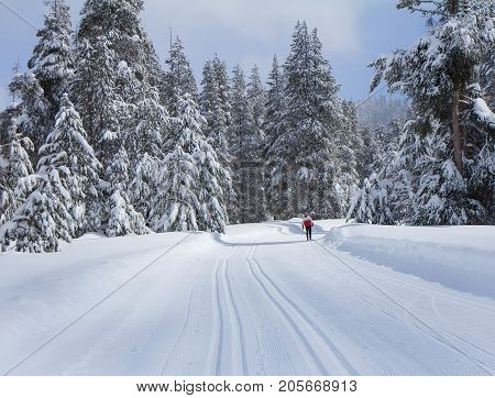 Ski trail in winter forest in snow