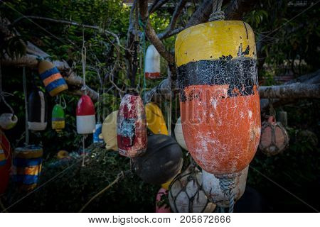 Old Buoys Hang in Tree with focus on yellow black and orange buoy in front