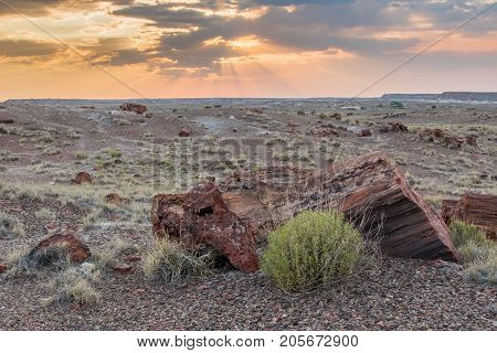 Petrified Wood At Sunset