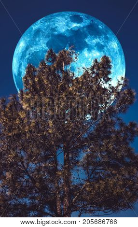 Supermoon. Landscape Of Sky And Full Moon With Moonlight Behind Pine Tree. Serenity Nature.