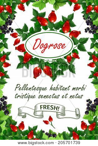 Dogrose berries or briar fruits poster for fruit shop or farm market. Vector bunch of bramble, blueberry or strawberry and cherry, forest raspberry or blackberry, cranberry or organic currant berry