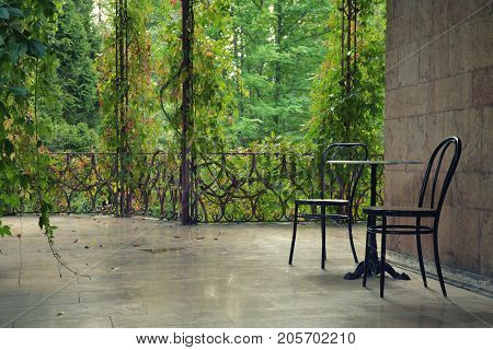 Two empty chairs on an overgrown patio