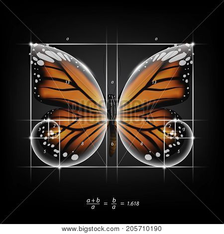 Golden section (ratio, divine proportion) and golden spiral on monarch butterfly vector illustration