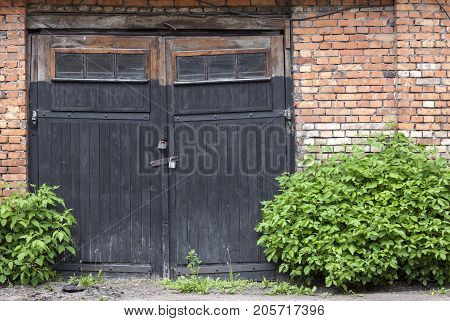 Old abandoned wooden garage doors overgrown with plants