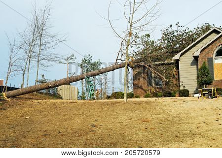 house with a fallen  tree on its roof after an EF2 tornado