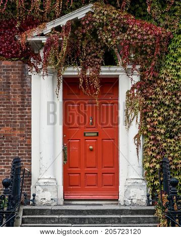 Red doorway covered by thick red and green vines. Dublin, Ireland, Europe.