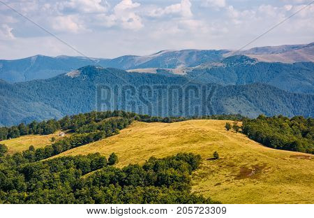 Alpine Grassy Meadow In Autumnal Carpathians