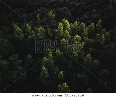 Abstract photographs of treetops in forest being lit by the afternoon sun with dark shadows beneath.