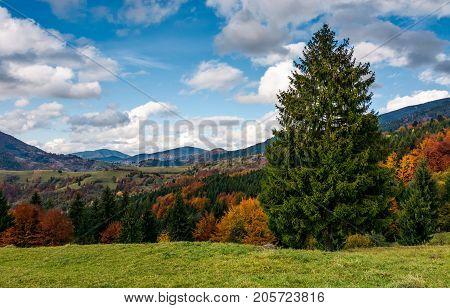 Giant Spruce Tree In Mountainous Autumnal Scenery