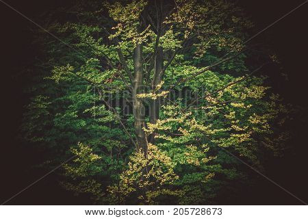 Large Tree Closeup Nature Background. Forestry Theme.