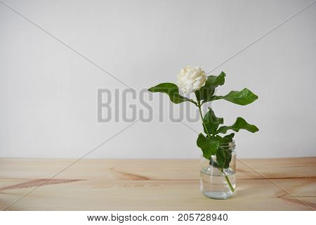 White flowers in a glass vase on a brown wood table Jasminum sambac in scientific name and space for text. - Tropical Asia flower.