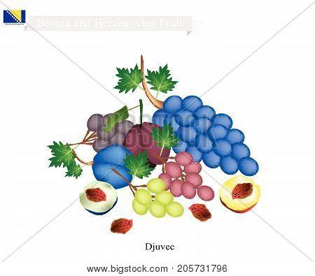 Bosnian Fruit, Plum and Grape. The Most Famous Fruits of Bosnia and Herzegovina.