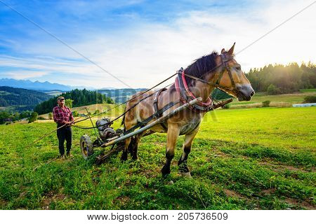 Sromowce Wyzne Poland - - August 27/2015; The farmer cultivates the soil with a horse in a mountainous area