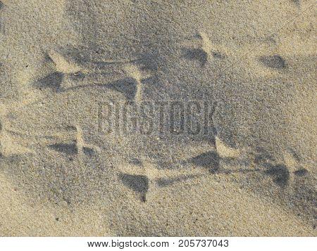 bird finger prints on the sand  bird finger prints on the sand