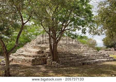 tree grows out of a smaller pyramid at the Edzna archaeological site in Campeche Mexico