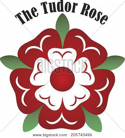Vector Tudor dynasty rose England country on white background