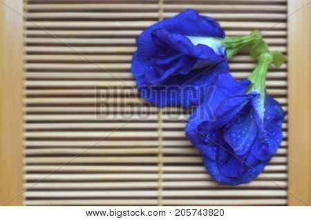 Butterfly pea, Clitoria ternatea, Central of Thailand